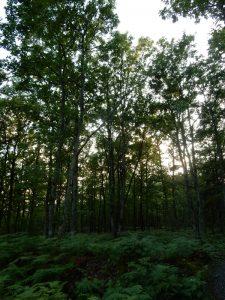 forêt domaniale d'Orléans