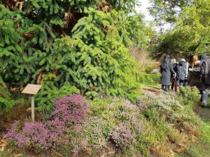 Arboretum des Grandes Bruyères à Ingrannes
