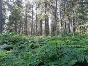 sous-bois en forêt d'Orléans