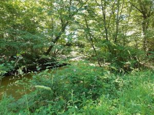 Les fossés de Jarnonce en Forêt d'Orléans