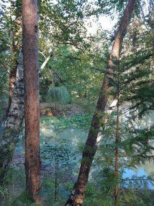 étang en forêt d'Orléans